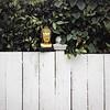Buddha Fence