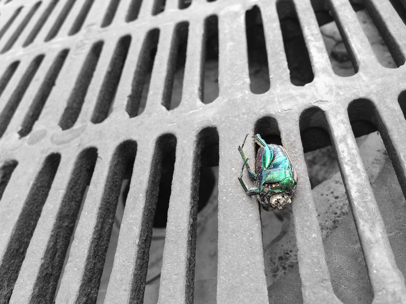 Green Beetle, No Head