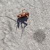 Dead Roach & Spot