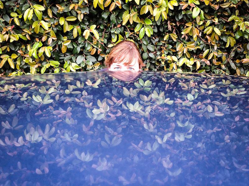 Hood Hedge Hide