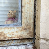 Window Pooh