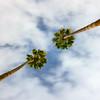Opposing Palms