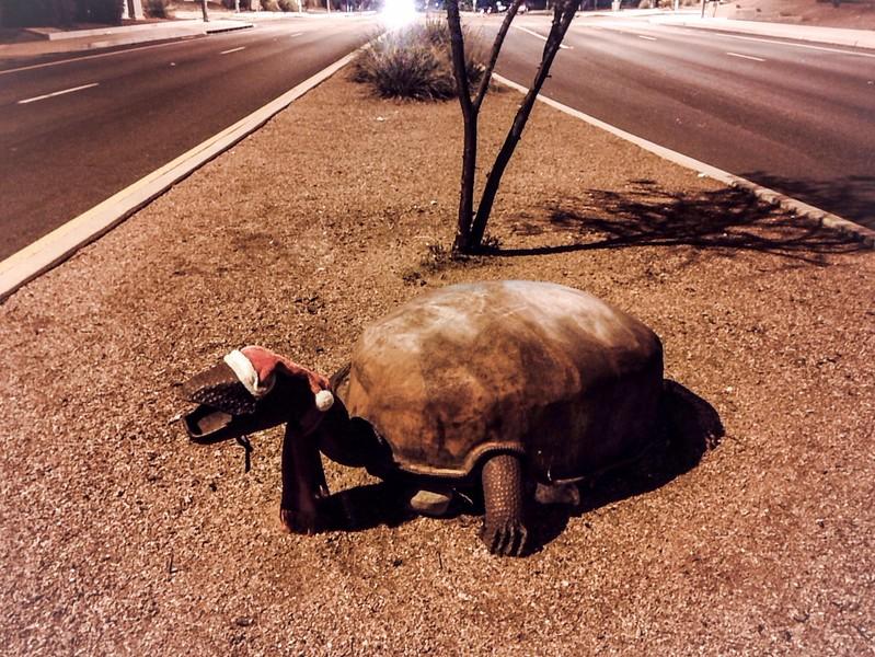 Festive Tortoise