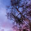 Dusk Tree