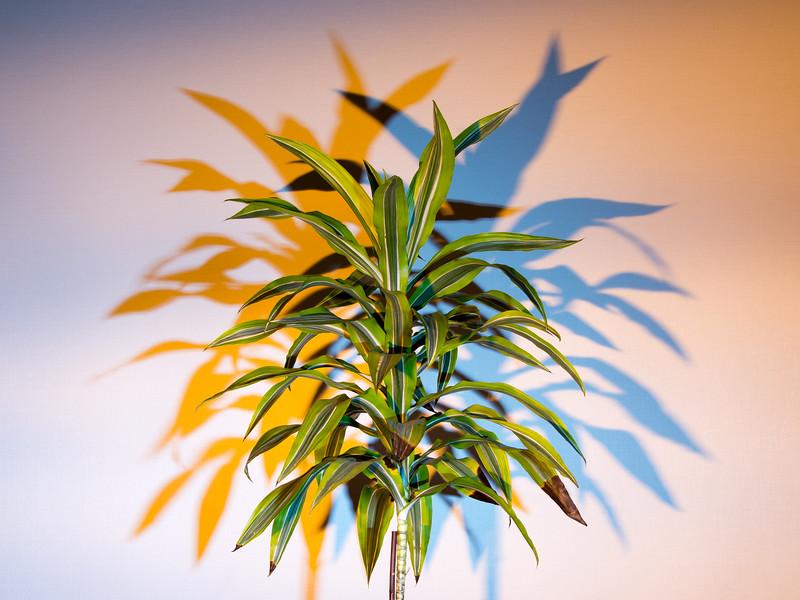Cross Color Plant