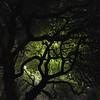 Tree Glow