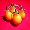 Tomato Quartet