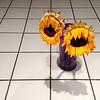Sad Sunflowers