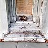 Friendly Neighborhood Opossum