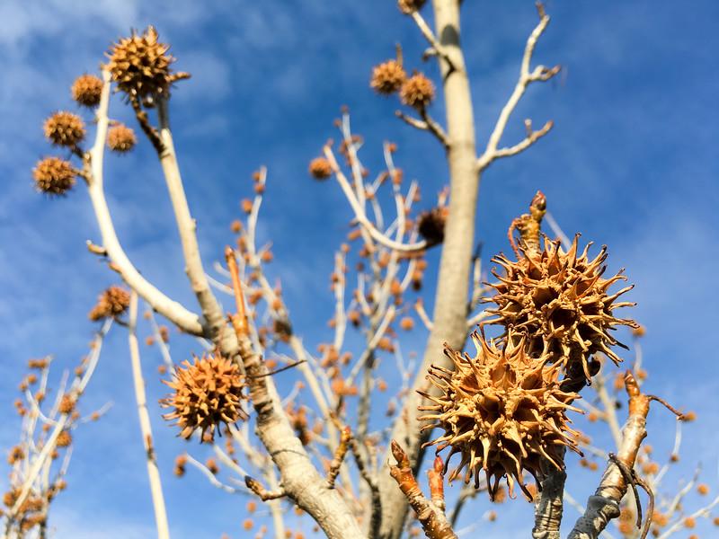 Spiky Seed Balls