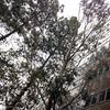 Building & Trees