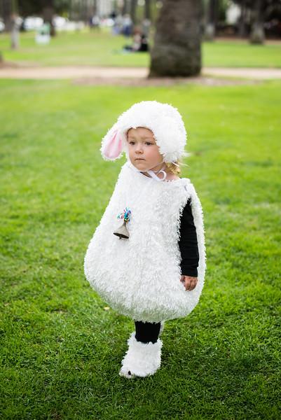 Lamb in the Park