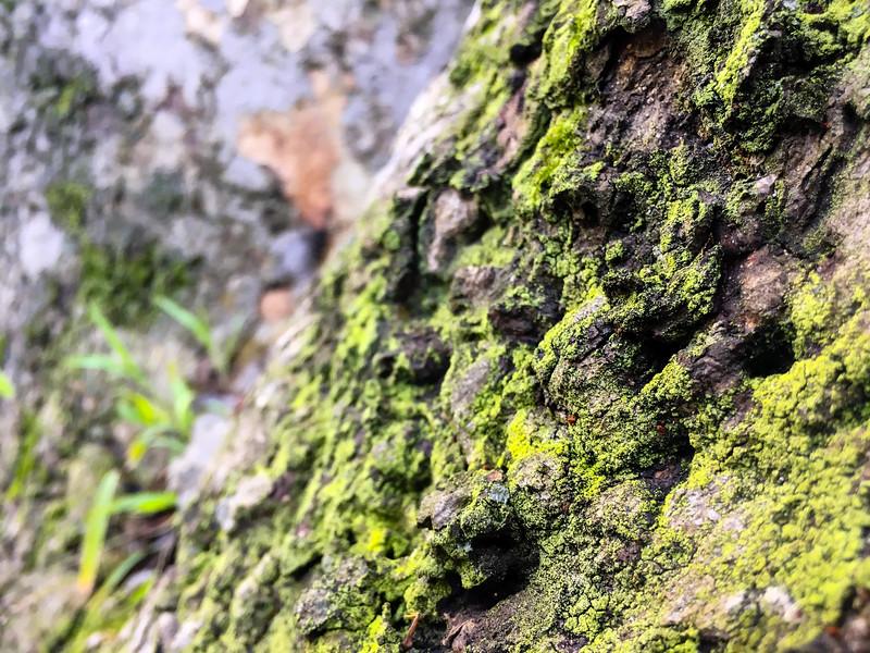 Green Dusting