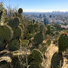 Prickly View