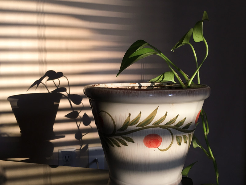 Afternoon Plant