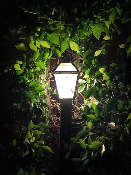 Lamp & Leaves