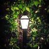 Lamp & Leaves