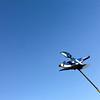 Blue Jay, Sky