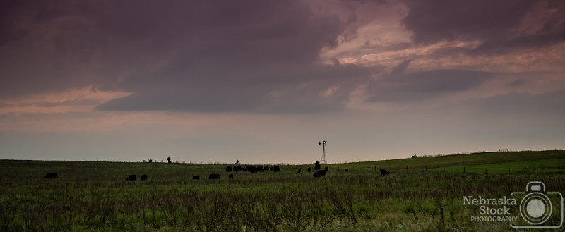 9-19-2018<br /> <br /> 262/365<br /> <br /> A herd of cattle graze in a pasture as a little storm rolls in early Wednesday evening in Wayne County. <br /> <br /> Photo taken with a Nikon D4 with a Nikon 28-70<br /> <br /> ISO 400<br /> <br /> 1/1000th at F4<br /> <br /> Picture No. 159960