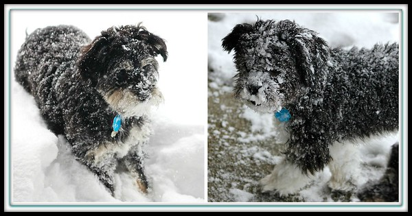 December 9, 2013 Yesterday was our first real snow of the season,  I'd say both Riley and Axel really enjoyed their play time.  Hot showers followed :)