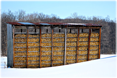 March 9, 2015  Winter Corn Crib I imagine this full of little Mice houses…..