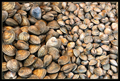 Clams, Clams and more Clams