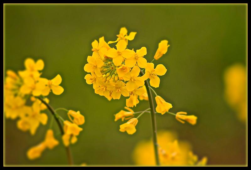 Roadside Flowers