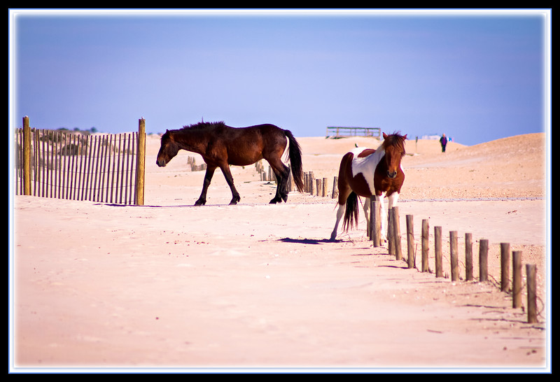 Assateague