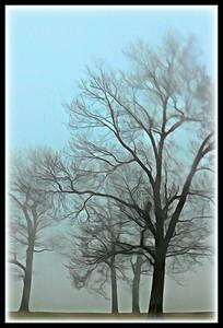 Rain & Fog