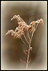 Winter's Flower