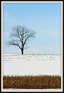 March 18, 2015  I am a sucker for the lone tree.  I will stop overtime to get the photo.