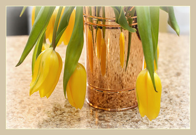"February 15, 2015  Sunday ""Still Life Challenge"" Week #2 Yellow Tulips We all need a little Sunshine in our lives."