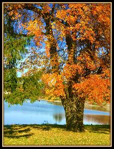 Maryland Fall