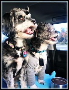 Riley & Axl