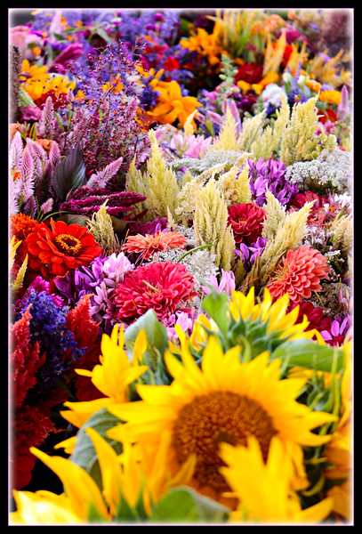 Flowers, Flowers and more Flowers