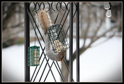 Annoying Squirrel