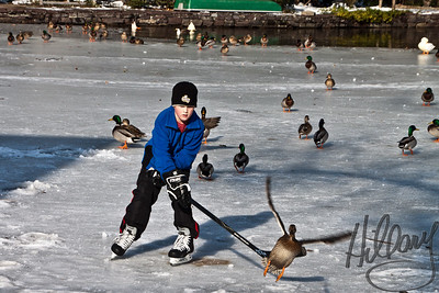 Post 769 12.29.10  NOooooo!!! I said hit the puck, not the duck!!!   Today was a half day at work and I had my camera with me so I could stop at Yardley, PA's local frozen pond...aka Lake Afton. I really haven't  spent much time watching kids on ice and seeing them there with parents ( and local paper photographer) I thought this was a great winter photo op..it was.  I actually had moved over to where some people were eating lunch to get a shot of the whole flock of ducks and geese marching over toward the food when this little boy skated over and 'ruined' my shot, but as I stood there I tried to get some action shots anyway and got this one..he did NOT hit the duck by the way, just looks like it here! I find that I am not really engaged in white on white snow shots, but do enjoy the bright contrast of color against the white..this was fun. I hope the pond will offer more photo opportunities. Thank you all for your comments the last couple of days as I try to get back into more of a daily shoot and post routine. I miss it and I feel my shooting has been a bit stale from not shooting more frequently...I don't have a lot of time to post the comments I would like, but have been browsing when I can and make a few comments and a lot of thumbs up..you are ALL inspiring me to get back into the daily routine..your photos are so wonderful, creative and motivatings! Thank you to ALL of you for that!!!