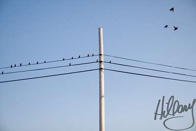Post 723 9.1.10 A simple shot of simplicity! I was at a stoplight on the way home and looked up to see the birds on the line...grabbed my camera and as some started to fly away this is what I snapped.. Slight contrast adjustment, but otherwise SOOC.