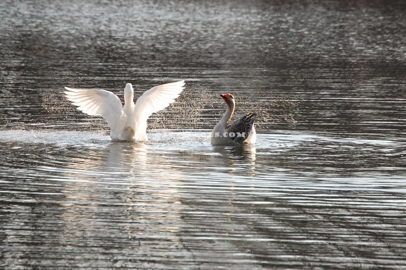 Bath Ducks 2