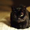 Cats_0003