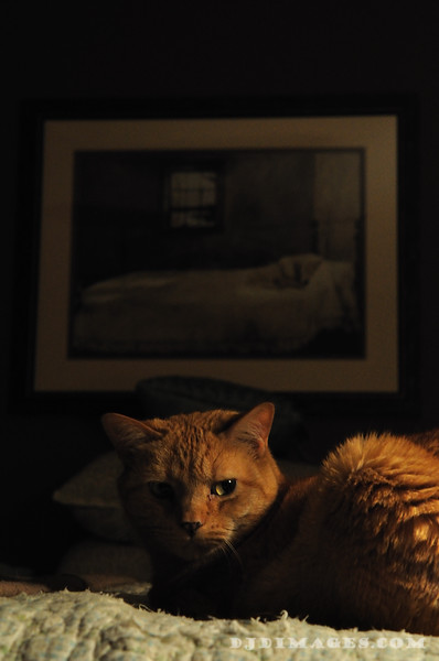Cats_0005