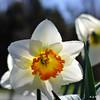Flower_20090416_0042