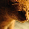 Cats_0001