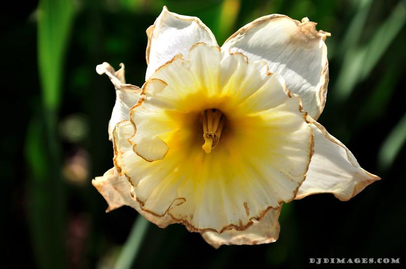 Flower_20090425_0004