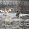 Bath Ducks 1