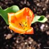 Flower_20090425_0003