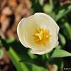 Flower_20090425_0005