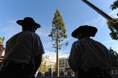 Public Safety Officers Mike Azevedo and Ana Rojo look at a 100-foot white fur Christmas tree that was put in to place at the Americana at Brand shopping center Wednesday, October 27, 2010. When finished the tree will have 10,000 lights and 15,000 ornaments and will debut at the holiday Christmas show at the center on November 18. (Hans Gutknecht/Staff Photographer)