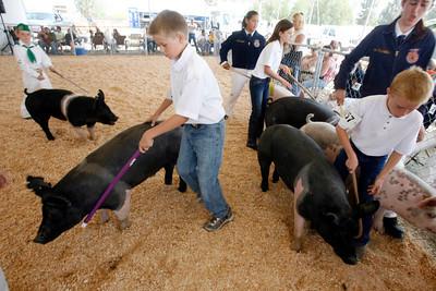 51st District Livestock Show