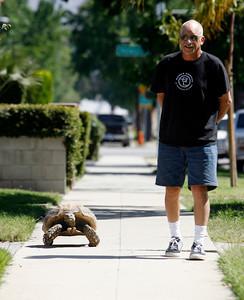 Tortoise Newman